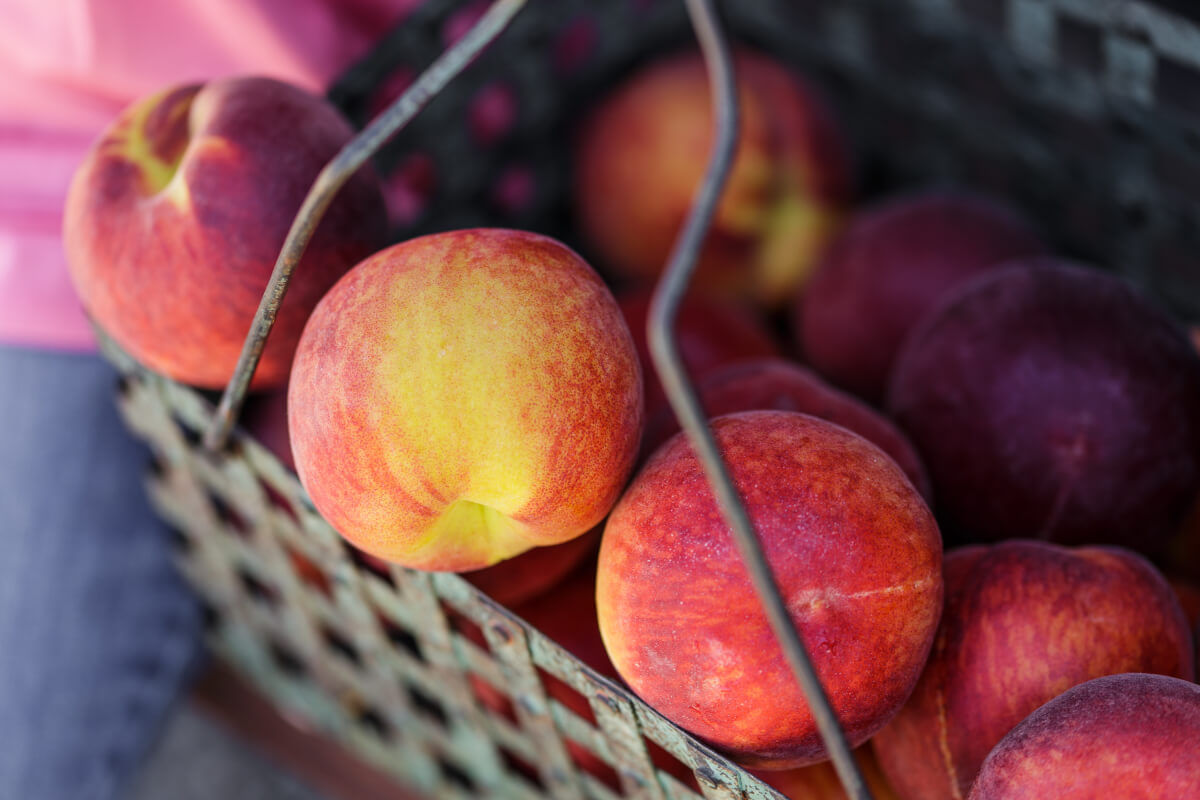 Group of peaches.